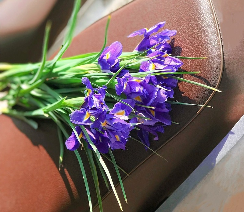 những cành hoa diên vỹ tím