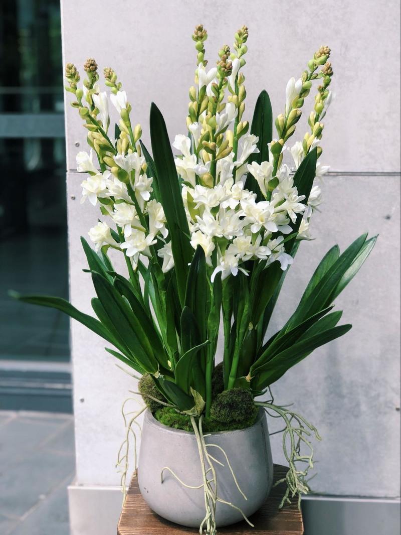 chậu hoa huệ trắng cho sinh nhật tháng 3