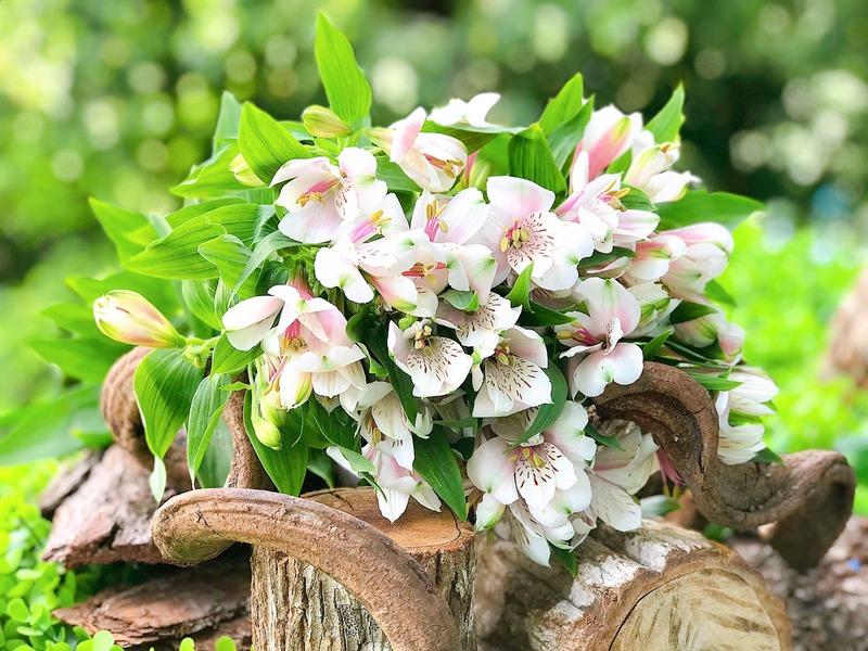 hoa thủy tiên trắng cho sinh nhật tháng 3