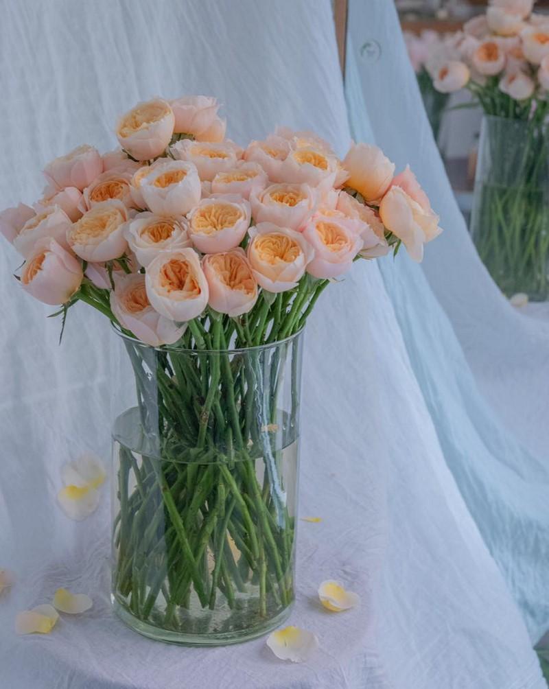 bó hoa juliet màu cam đẹp
