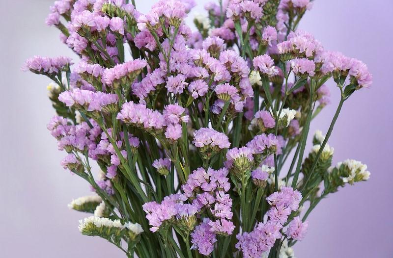 bó hoa salem màu tím