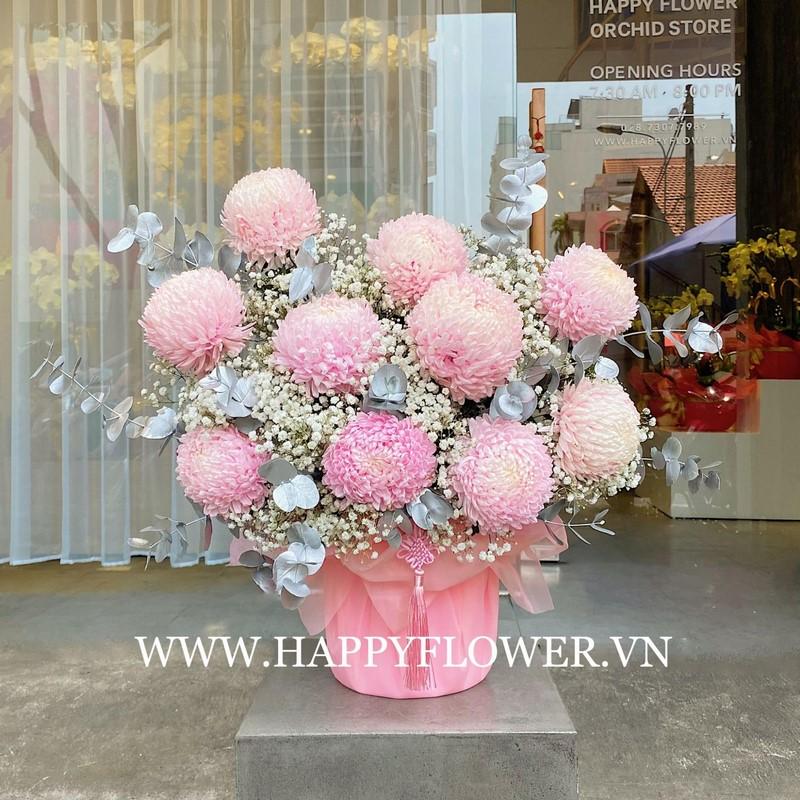 chậy hoa cúc mẫu đơn màu hồng đẹp