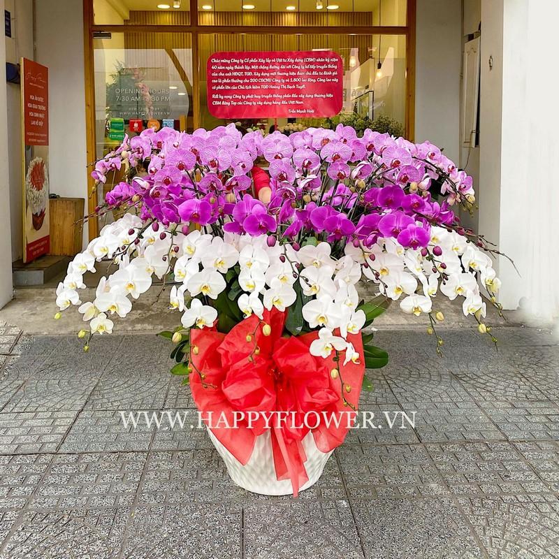 chậu hoa lan hồ điệp màu tím và trắng