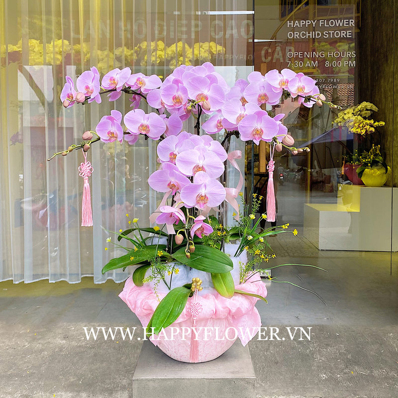 Chậu hoa lan hồ điệp tím hồng 6 cành