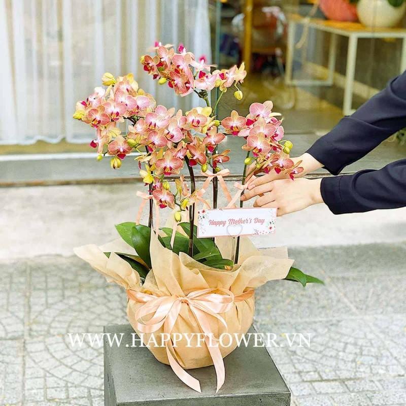 Chậu hoa lan hồ điệp màu hồng cam