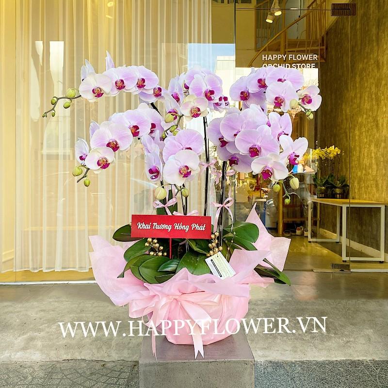 Hoa lan hồ điệp hồng thích hợp tặng khai trương