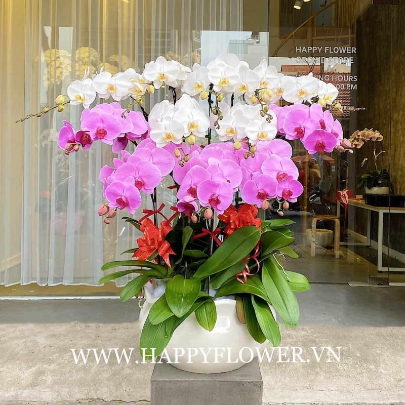 Chậu hoa lan tím và trắng