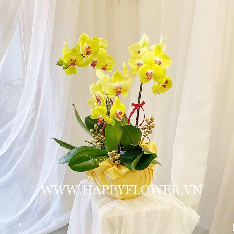 Chậu hoa lan hồ điệp vàng sang trọng