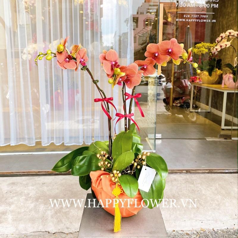 Hoa lan hồ điệp màu cam
