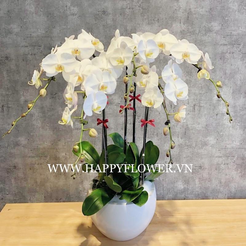 Chậu hoa lan hồ điệp 5 cành màu trắng