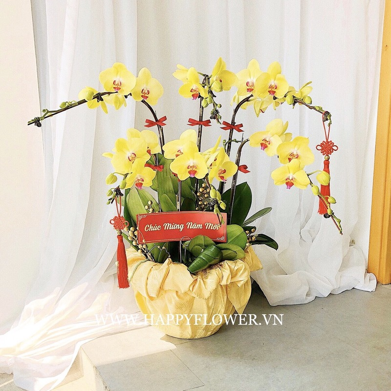 lan hồ điệp phong thủy màu vàng phù hợp với người mệnh thổ