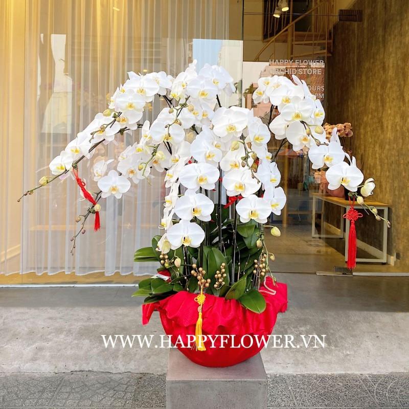 Chậu hoa lan được gói quà đẹp mắt với bông hoa màu trắng tinh khôi