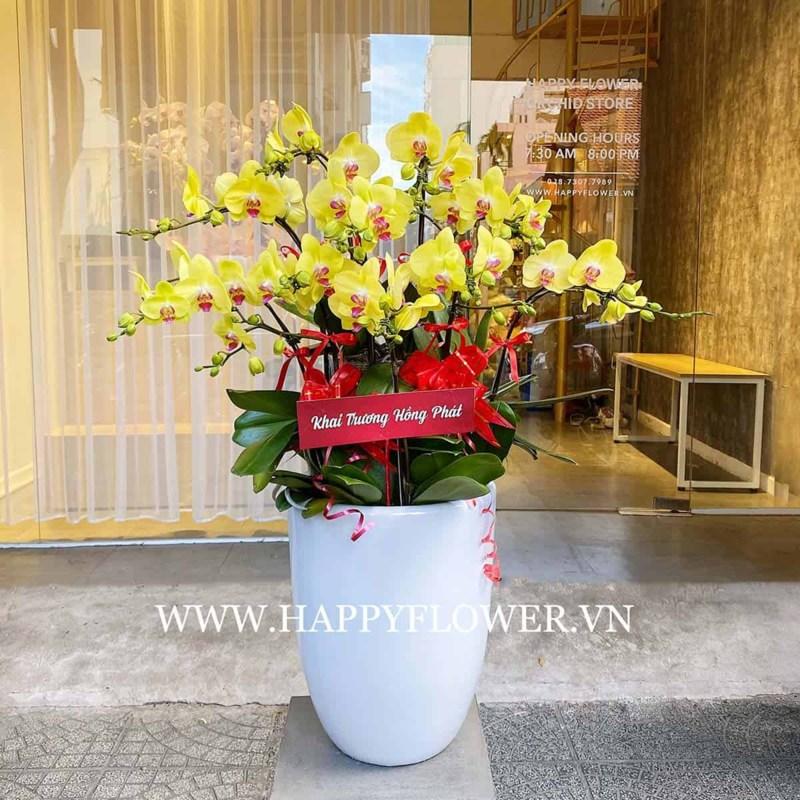 Chậu lan vàng sang trọng sẽ là món quà đặc biệt dành cho các dịp sinh nhật, khai trương