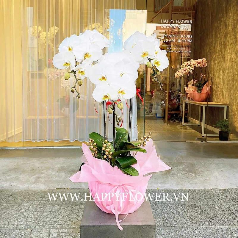 chậu hoa lan hồ điệp màu trắng và giấy gói hồng