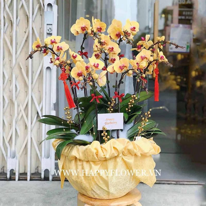 chậu hoa lan hồ điệp màu vàng phát tài phát lộc