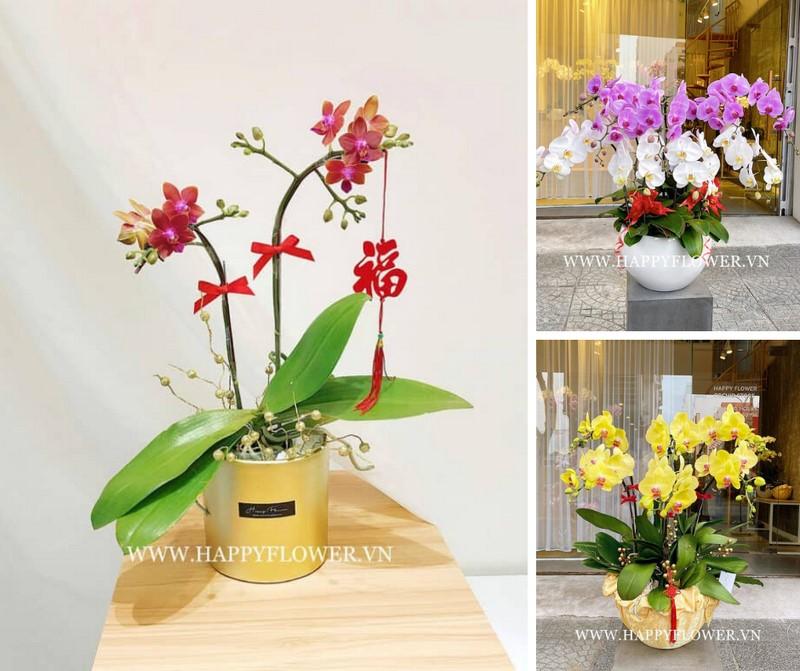 Hoa lan hồ điệp đẹp, sang trọng tại Happy Flower