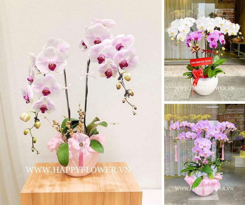 Những mẫu hoa lan cực đẹp