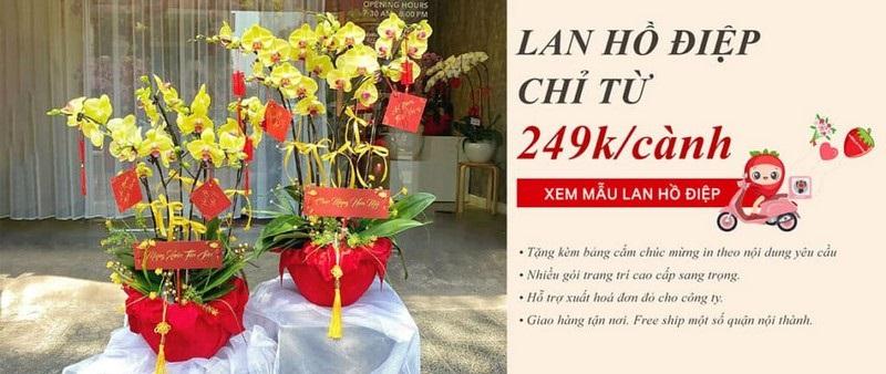 Happy Flower - Địa điếm bán hoa lan hồ điệp tuyệt đẹp