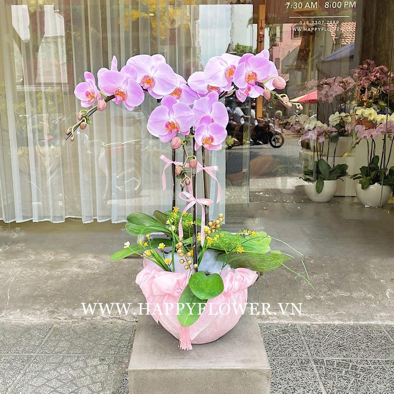 Chậu hoa lan hồ điệp tím tặng hoa sinh nhật